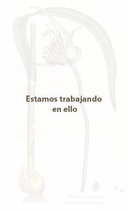 Ilustración de Aceite Esencial de Ajo