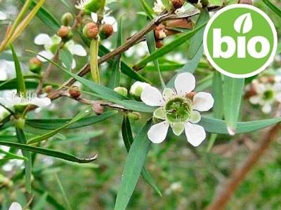 Aceite Esencial de Árbol del Té Limón BIO  - Leptospermum petersonii