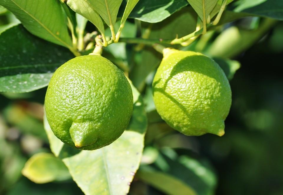 Petitgrain limonero