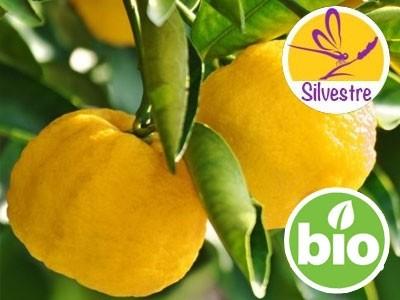 Aceite Esencial de Yuzu Silvestre y BIO