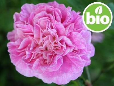 Aceite Esencial de Rosa Afgana BIO