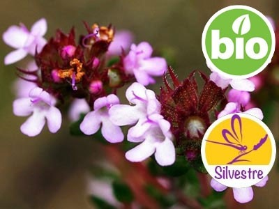 Aceite Esencial de Tomillo Rojo Silvestre y BIO - Zygis