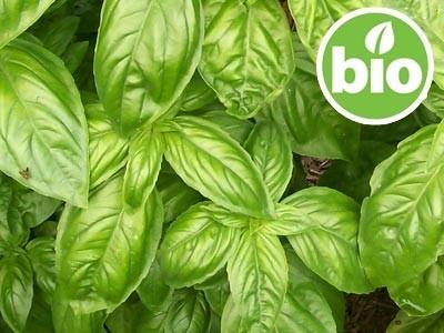 Aceite Esencial de Albahaca Exótica BIO - Qt Metilchavicol