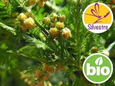 Aceite Esencial de Artemisia Annua