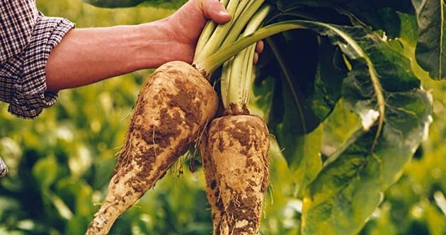 inulina vegetal