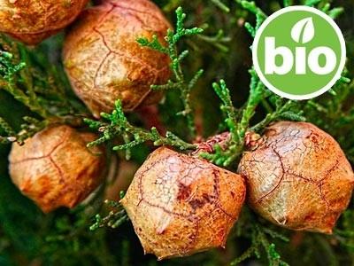 Aceite esencial de Ciprés BIO - Cupressus sempervirens