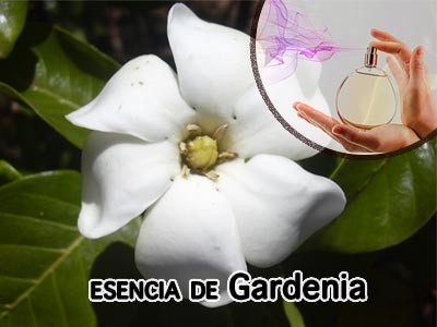 Esencia Aromática de Gardenia
