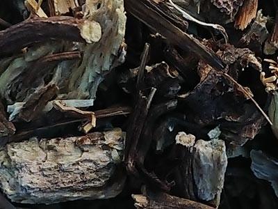 Equinacea Purpurea planta cortada