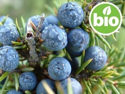 Juniperus comunis - Bayas de Enebro BIO
