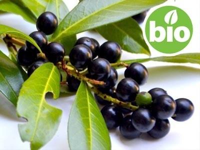 Aceite esencial de Laurel BIO - Laurus nobilis