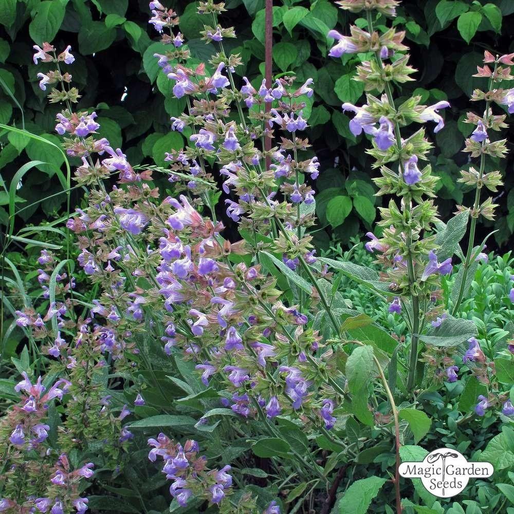 Hidrolato de Salvia Officinalis BIO