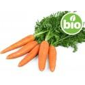 Aceite de Zanahoria BIO en Sésamo BIO