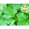 Aceite Esencial de Cilantro BIO - Semillas