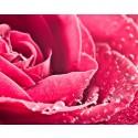Agua de Rosas natural - Nueva formulación