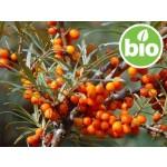 Aceite de Semilla de Espino Amarillo BIO