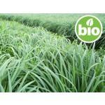 Aceite Esencial de Lemongrass BIO