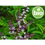 Aceite Esencial de Hierba Luisa / Cedrón BIO