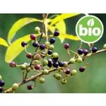 Aceite Esencial de Litsea Cubeba BIO / Verbena Exótica BIO