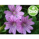 Macerado de flores de Malva en Girasol BIO