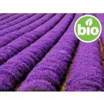 Macerado de flores de Lavanda en Girasol BIO
