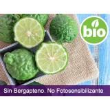 Aceite Esencial de Bergamota sin Bergapteno BIO