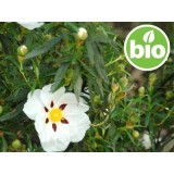 Hidrolato de Jara BIO - Silvestre