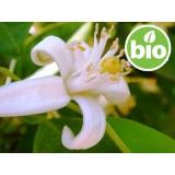 Aceite Esencial de Azahar / Nerolí BIO