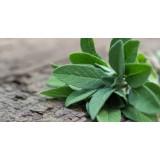 Aceite Esencial de Salvia Officinalis - Hungría