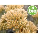 Aceite Esencial de Helichrysum Picardii BIO