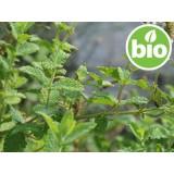 Aceite Esencial de Hierbabuena BIO