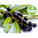 Aceite Esencial de Laurel BIO