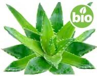 Aceite de Aloe Vera BIO