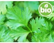 Aceite Esencial de Cilantro BIO - Hojas