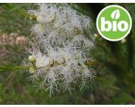 Aceite Esencial de Árbol del té BIO - Sudáfrica