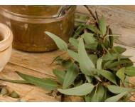 Aceite Esencial de Eucalipto Glóbulo 80/85