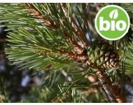 Aceite Esencial de Pino silvestre BIO