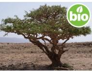 Aceite Esencial de Incienso BIO - Boswellia serrata