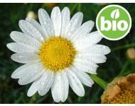 Aceite Esencial de Manzanilla Romana BIO - Silvestre