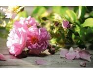 Aceite Esencial de Rosa de Damasco Dilución