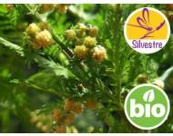 Aceite Esencial de Artemisia Annua BIO - Silvestre