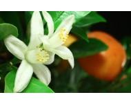 Fragancia Flor de Azahar