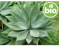 Inulina Vegetal BIO
