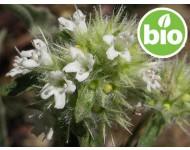 Aceite Esencial de Mejorana Española / Silvestre BIO