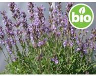 Aceite Esencial de Salvia Española BIO
