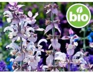 Aceite Esencial de Salvia Romana BIO - Bulgaria