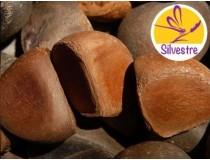 Aceite de Andiroba Silvestre - Economía circular