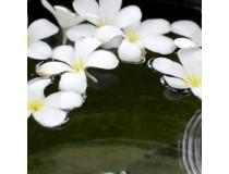 Monoi de Tahití Original (no Perfumado)