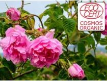Extracto líquido de Rosa Damascena Ecocert - Hidroglicerinado.