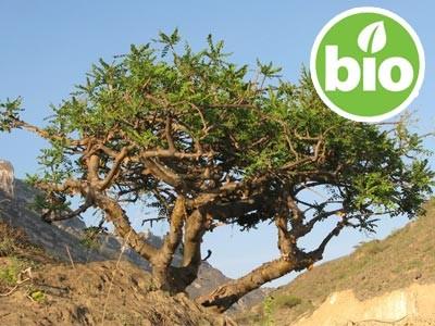 Aceite Esencial de Incienso - Boswellia carterii BIO