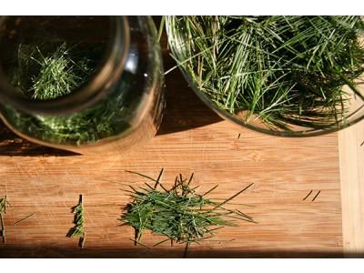 Aceite Esencial de Pino silvestre